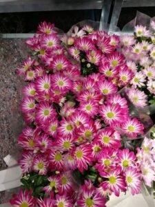 Ilustracija: cveće, foto: Svetlana Kovačević, Domaćinska kuća
