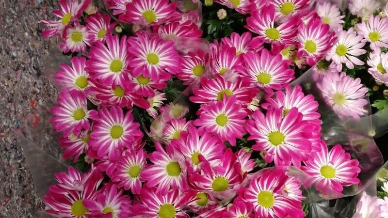 Kako deluju boje cveća na čoveka