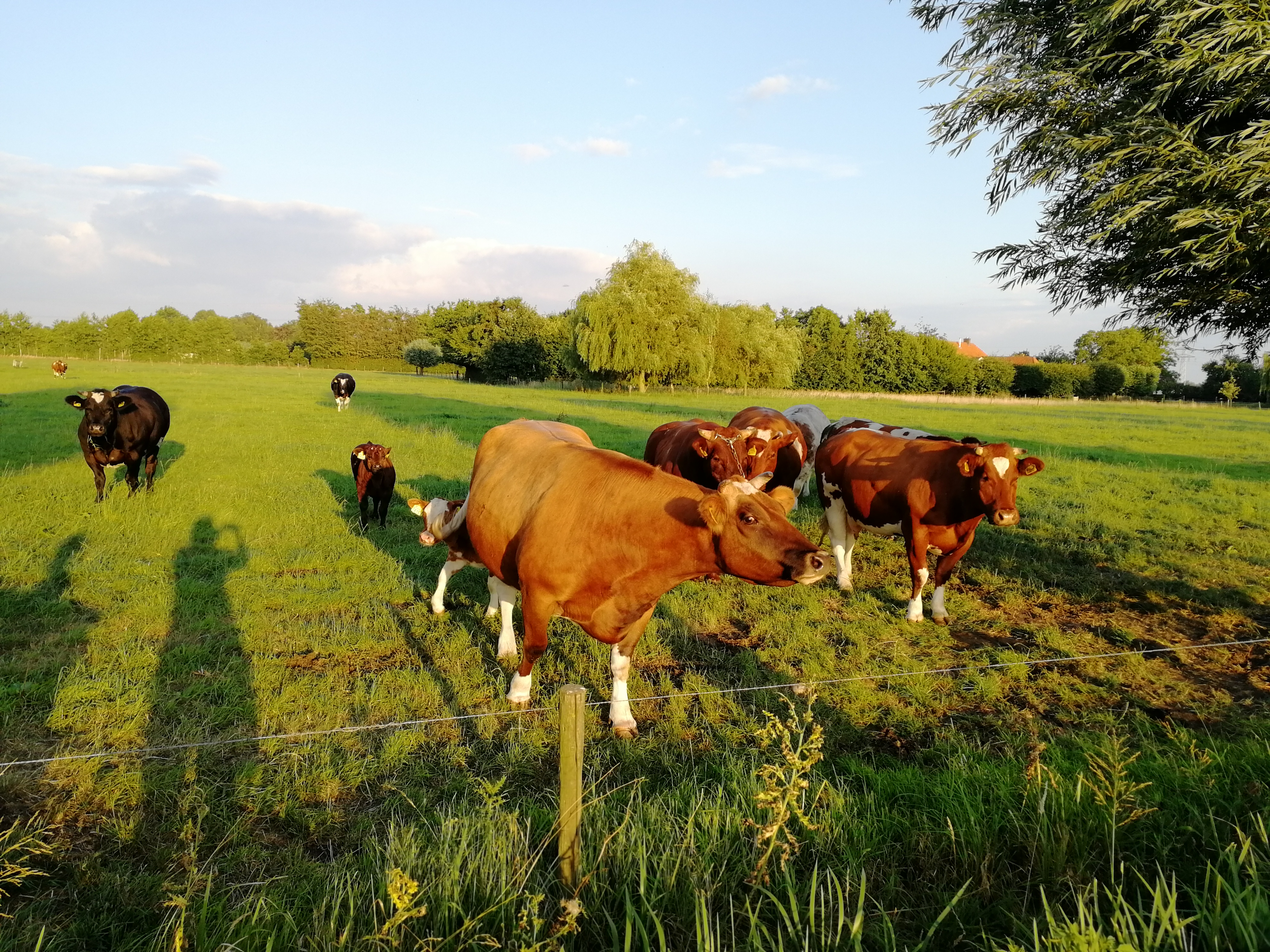 Ilustracija: Farma u Holandiji, foto: Svetlana Kovačević, Domaćinska kuća