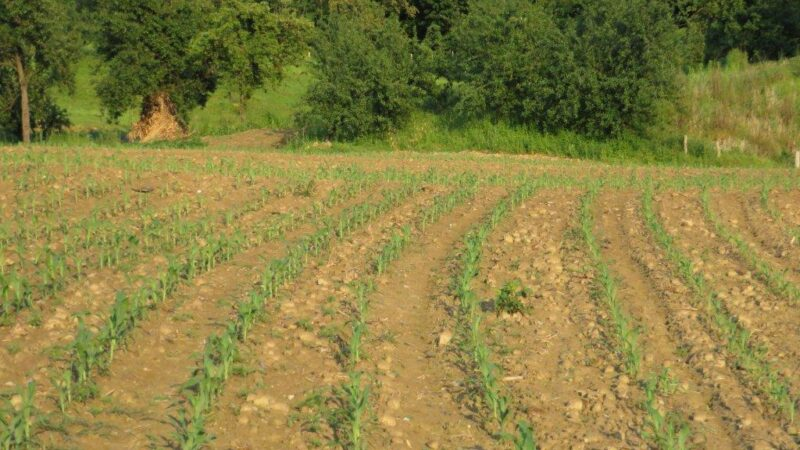 Raška – prvi zakupi državnog zemljišta