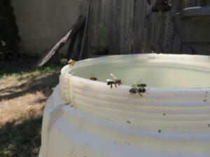 Ilustracija: pčele, foro: Svetlana Kovačević, Domaćinska kuća