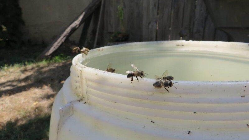 Novac za pčelare