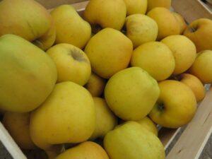 Ilustracija: jabuke, foto: Svetlana Kovačević, Domaćinska kuća