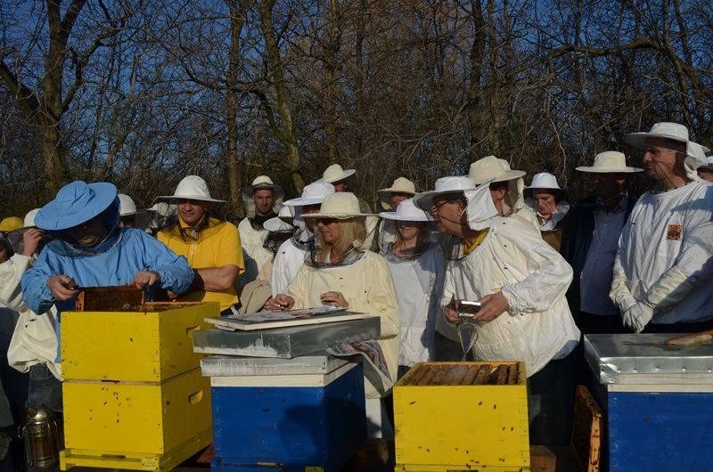 Ilustracija: pčelinjak, foto: Slobodan Jevtić, Kostolac