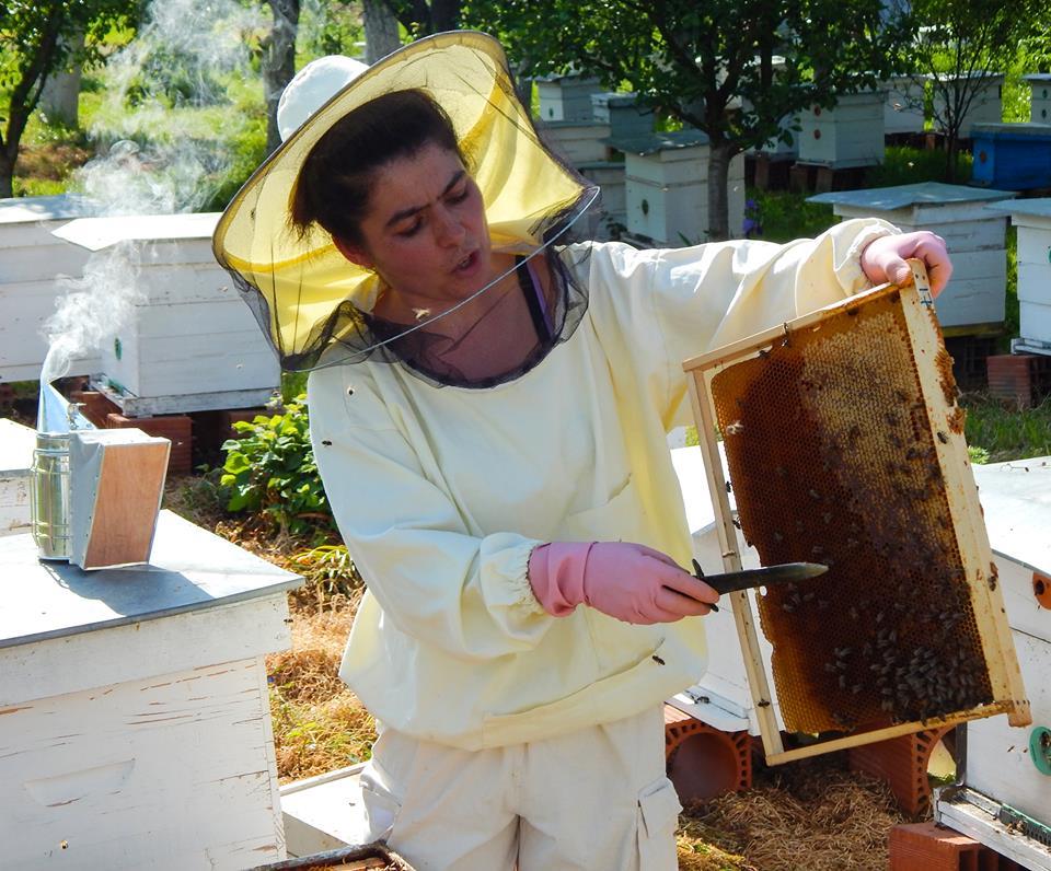 Ilustracija: pčelinjak, foto: Sa FB stranice Apis-a