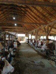 Ilustracija; farma, foto; Svetlana Kovačević
