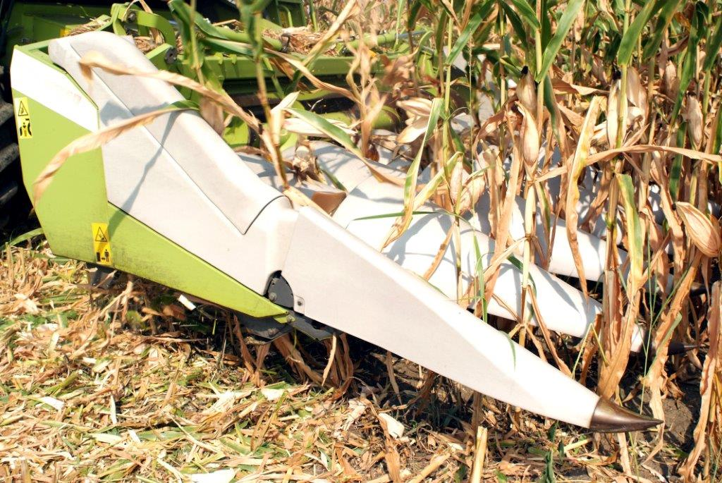 Ilustracija: berba kukuruza, foto: Svetlana Kovačević