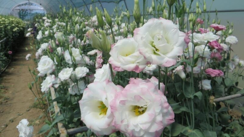 Kako do uspešnog cvećara