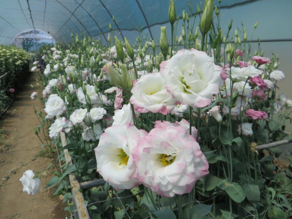 Ilustracija: cveće u plasteniku, foto: Svetlana Kovačević