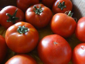Ilustracija: paradajz, foto: Svetlana Kovačević