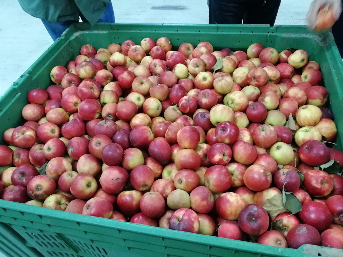 Ilustracija: ambalaža za voće, foto: Svetlana Kovačević