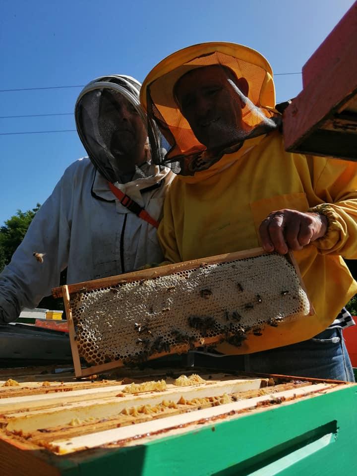 Ilustracija: pčelinjak Đurđić, foto: Domaćinska kuća