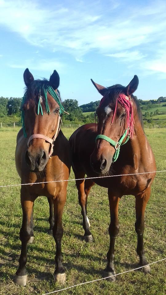 Ilustracija: Konji na imanju Ilić, foto: Domaćinska kuća