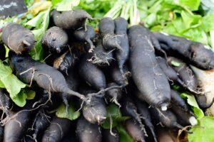 Ilustracija: crni koren, foto: pixabay.com