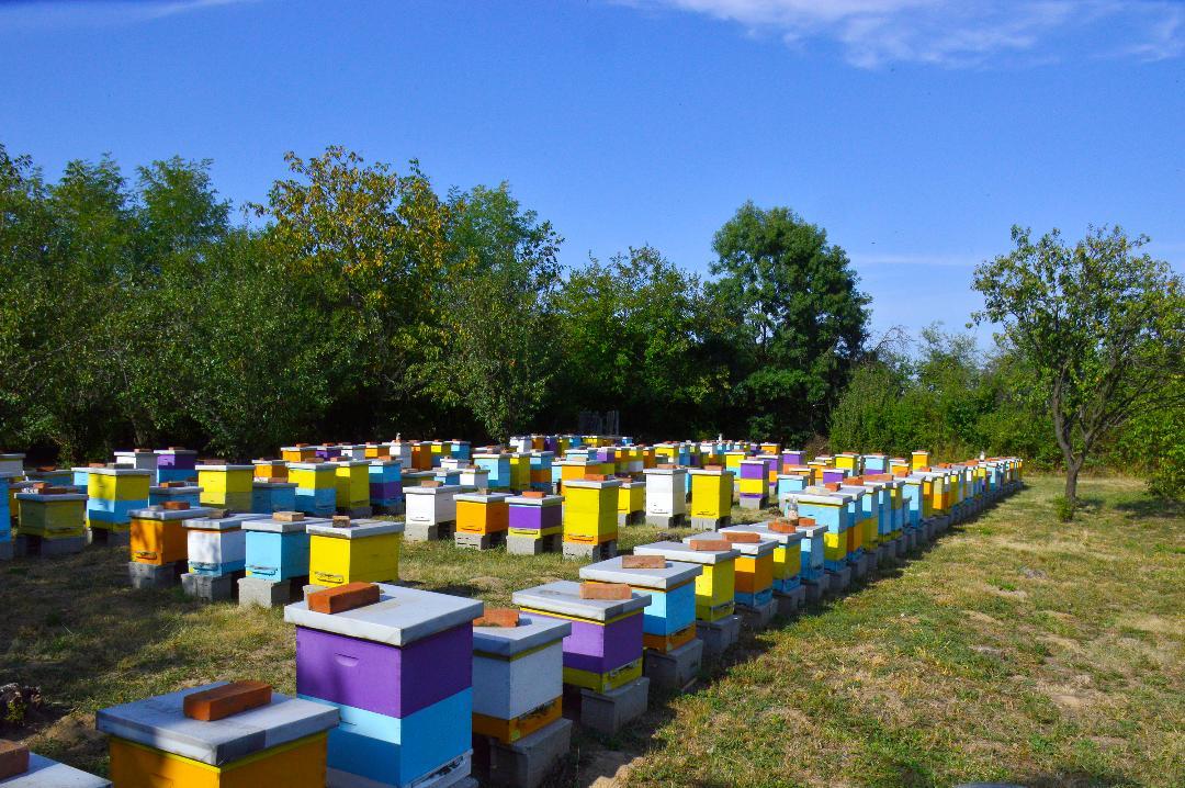 Ilustracija: pčelinjak Stanković, foto: Igor Stanković