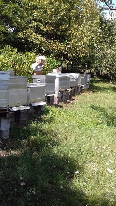 Ilustracija: pčelinjak Gojka Pejčinovica, foto: Domaćinska kuća
