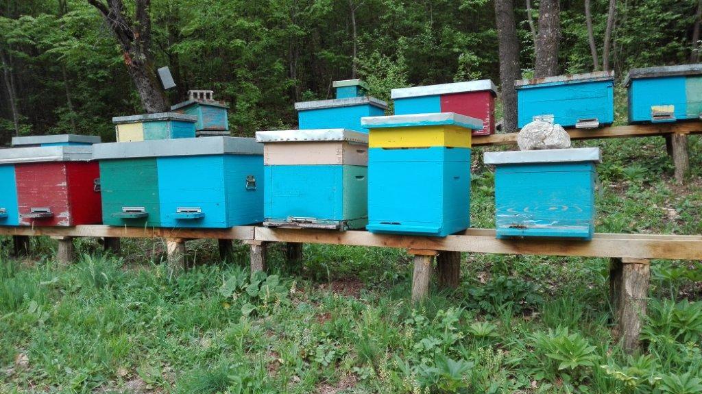 Ilistacija: Pčelinjak, foto: Goran Đaković