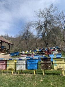 Ilustracija: Krsmanović na pčelinajku