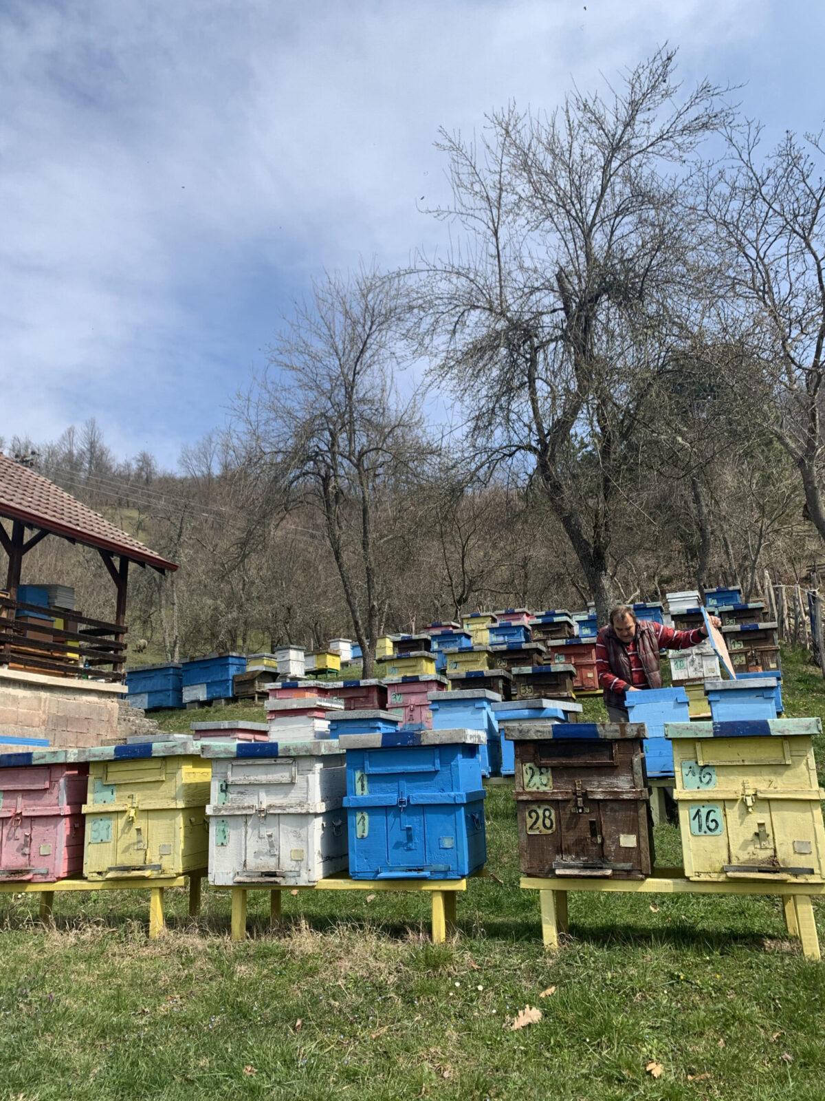 Dragutin Krsmanović: Svaki pčelinjak je karantin za sebe