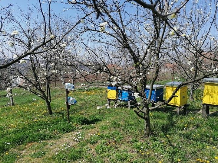 Ilustracija: pčelinjak u aprilu, foto: Svetlana Kovačević