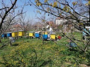 Ilustracija: Pčelinjak, foto: Svetlana Kovačević