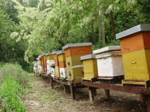 Ilustracija: Pčelinjak, foto: Vlastimir Spasić