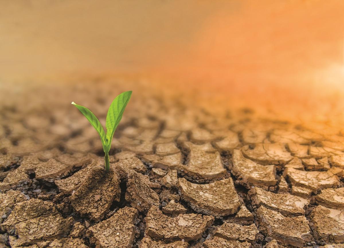 Ilustracija: suša, foto: Dunav osiguranje