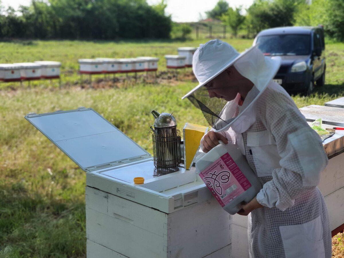 Ilustracija: Pčelinjak porodice Tomić. foto: Biljana Tomić