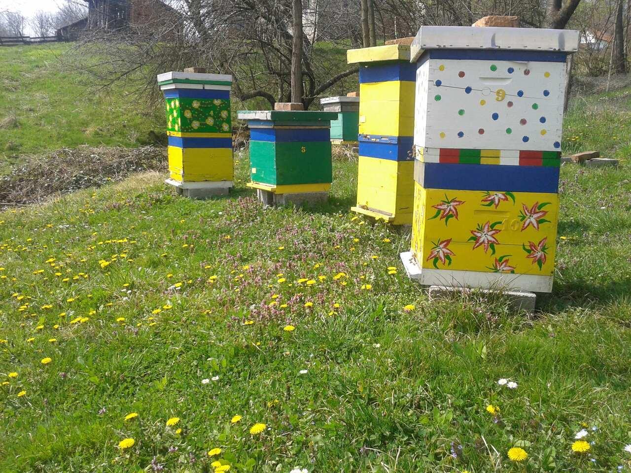 Ilustracija: pčelinjak Simanović