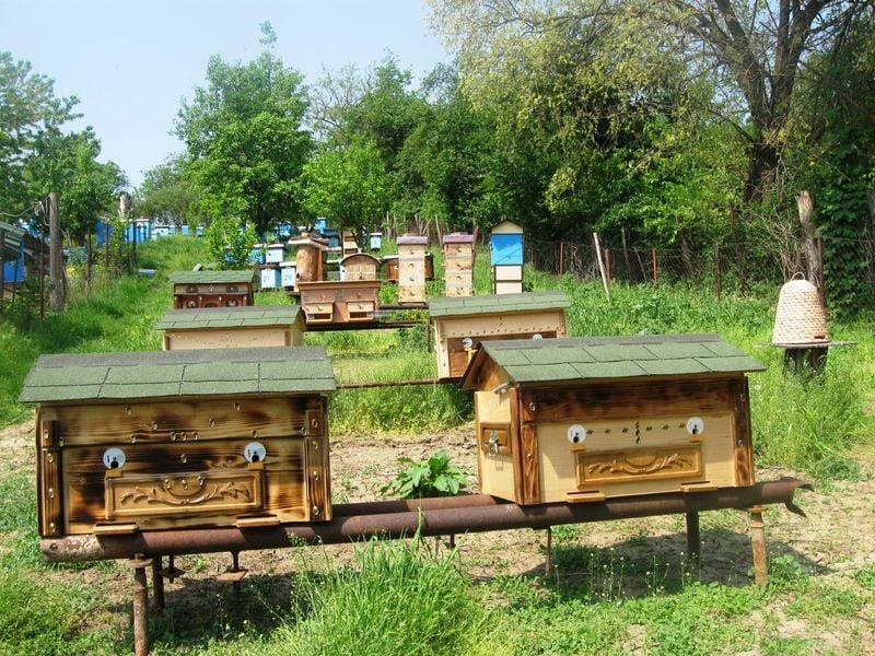 Ilustracija: pčelinjak, foto: Slobodan Jevtić
