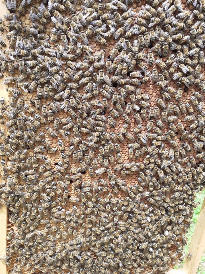 Ilustracija: pčele, foto: Maja bee