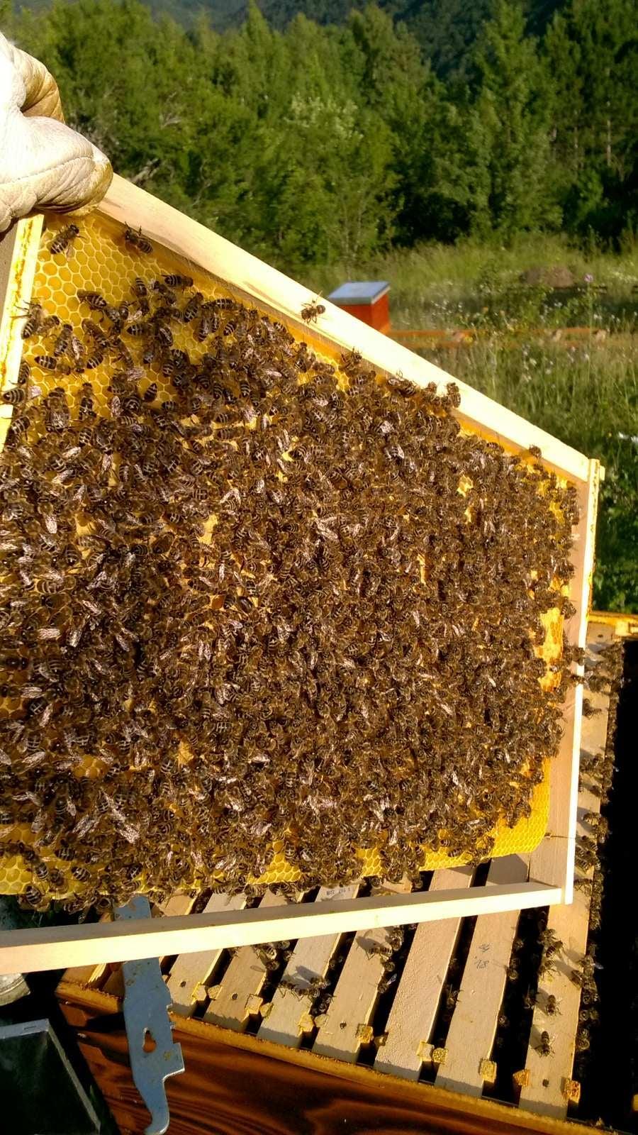 Ilustracija: pčele, foto: Marija Vitez