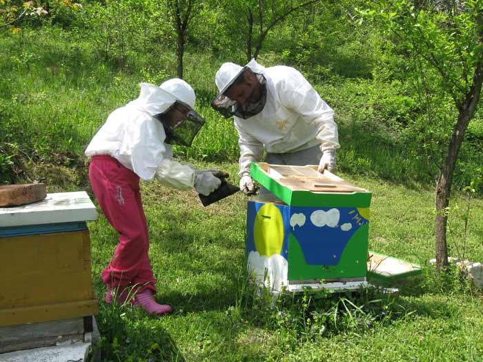 Ilustracija: pregled pčelinjaka, foto: Domaćinska kuća