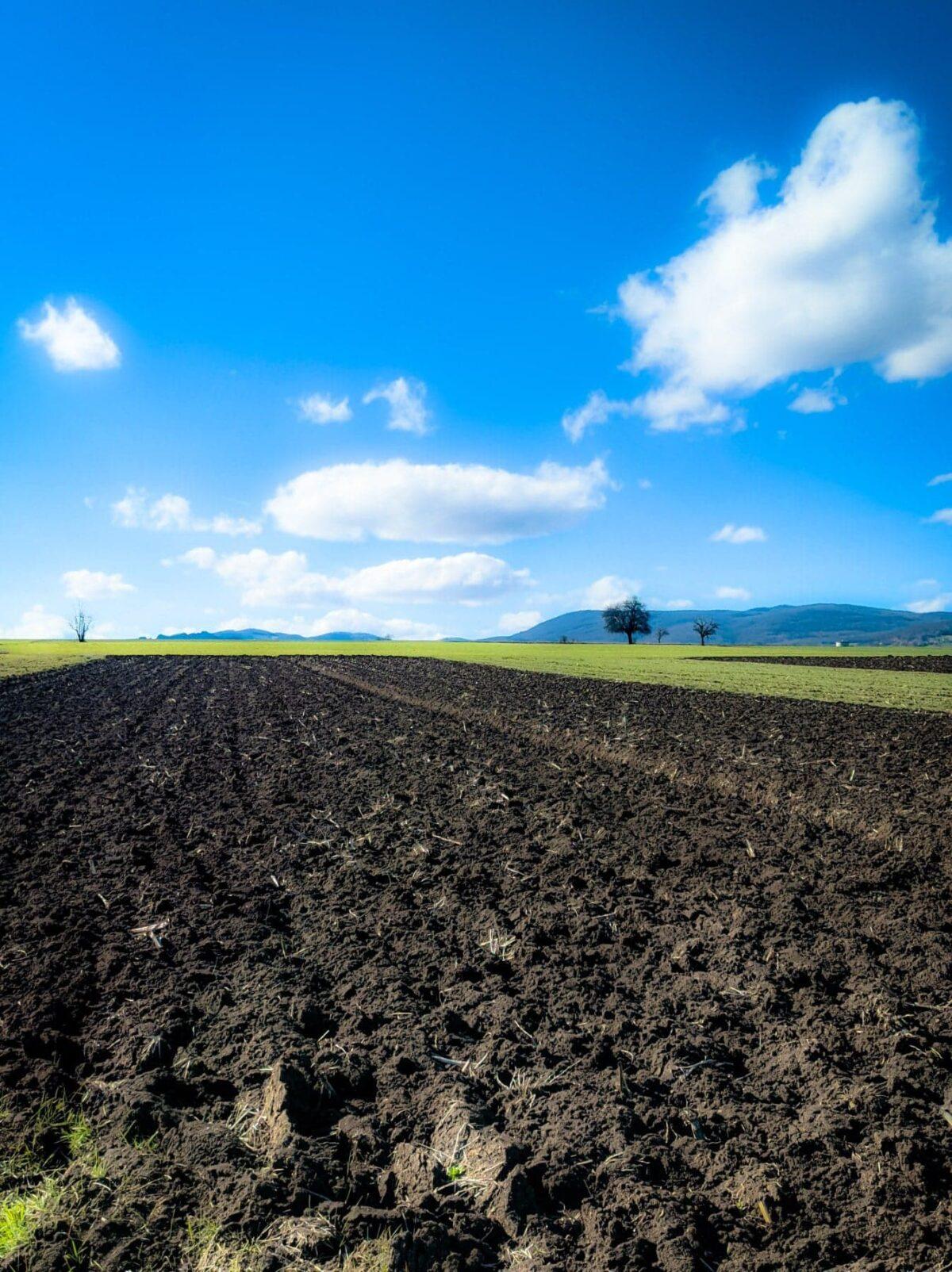 Ilustracija: obradivo zemljište, foto: Ivan Nikolić