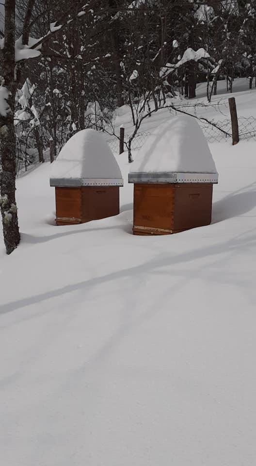 Ilustracija: pčelinjak, foto: FB M.B.