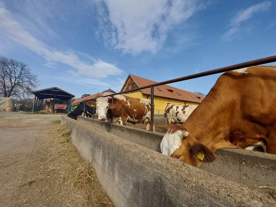 Ilustracija: Farma poljoprivredne škole u Valjevu, foto: I. D.