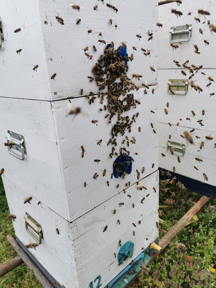 Ilustracija: pčelinjak Slobodana Jevtića, foto: S.J.