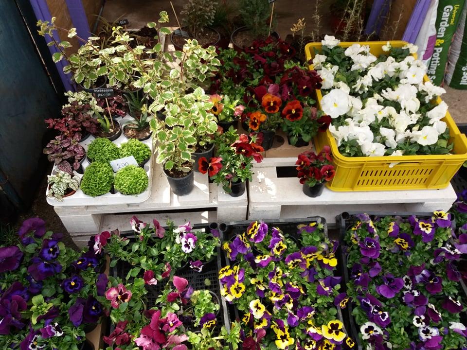 Ilustracija: cveće, foto: Svetlana Kovačević