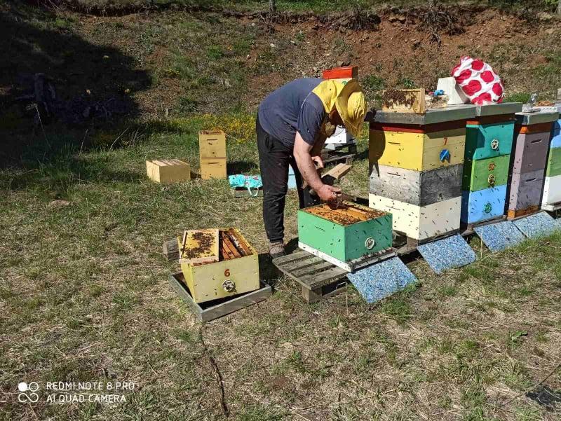 Ilustracija: pčelinjak, foto: Domaćinska kuća