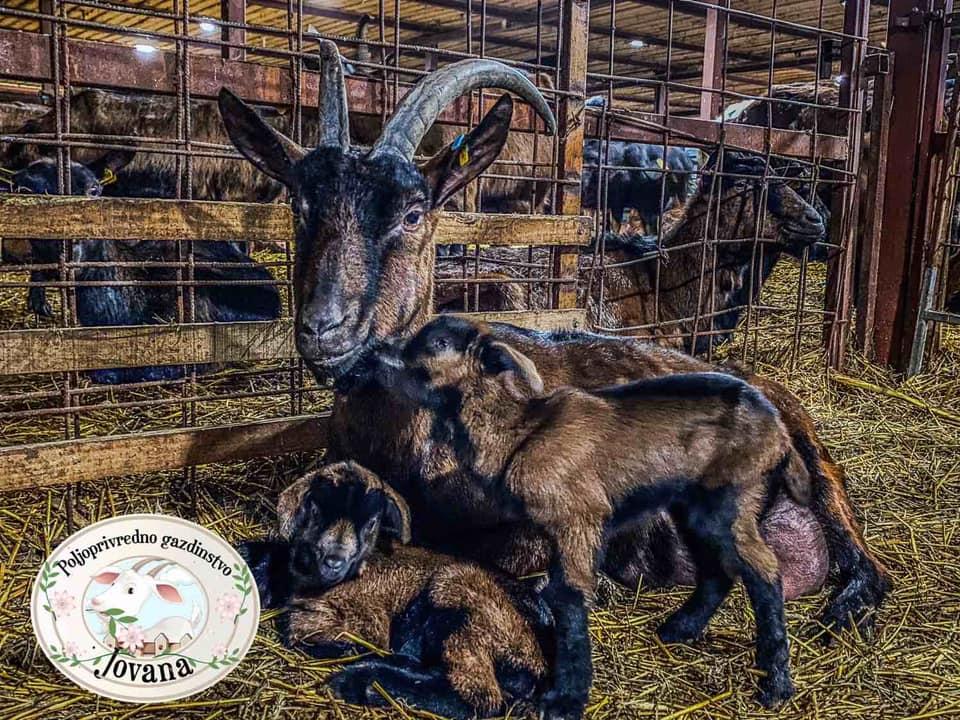 Ilustracija: Farma koza, foto: fb arhiva proizvodi od kozjeg mleka
