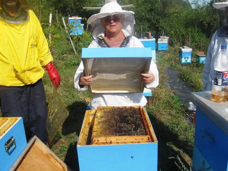 Pčelar Slobodan, primer koji treba slediti 1