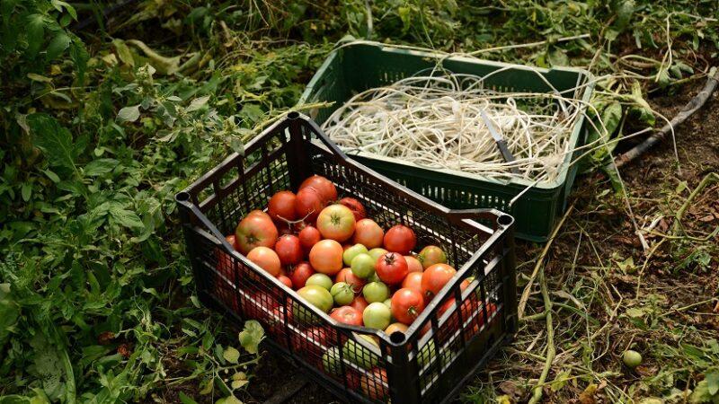 Kako do novca za pokretanje i razvijanje poljoprivredne proizvodnje?